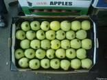 Яблока с Азербайджана. - фото 5