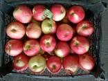 Яблока,виноград - фото 2