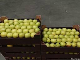 Яблоки из Польши! - фото 1