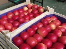 Яблоки из Польши! - photo 7