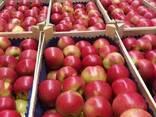 Яблоки из Польши! - photo 8
