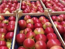 Яблоки из Польши! - фото 8
