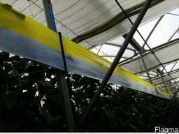 Желто-голубые рулонные ловушки 30смх100м - фото 3