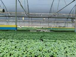 Желто-голубые рулонные ловушки 30смх100м - фото 4