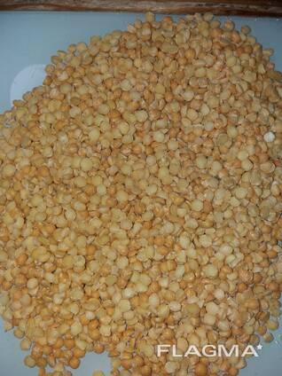 Горох желтый колотый, целый для применения в пищу