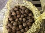 Грецкий орех - фото 3