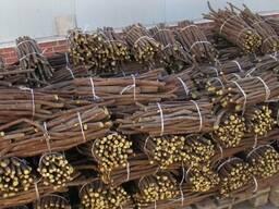 Корень солодки - завод в Азербайджане.