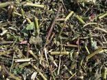 Лекарственные Травы и плоды - photo 3