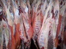 Мясо баранина, говядина Халял из Испании