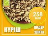 Оптом семена рис, люцерны и пшеницы - фото 3