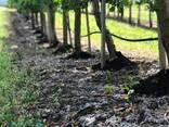 Органическое удобрение компост из куриного помёта GoodYield - фото 6