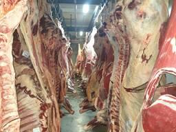 Полутуши говядины