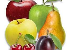 Саженцы яблони, груши, . .. Проектирование садов и поддержка. .. Ищем представителя.