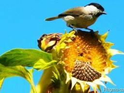 Автоматическая установка для защиты от птиц