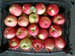 Яблока, виноград - фото 2