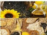 Зерно, зернобобовые и масленичные культуры на экспорт - фото 1