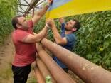 Желто-голубые клеевые рулонные ловушки 30смх100м - фото 2
