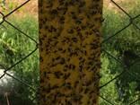 Желтые клеевые ловушки-карты 25смх40см - фото 4